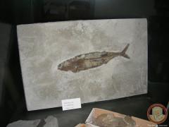 Uno dei reperti archeologici sequestrati a Montecarotto dai Carabinieri