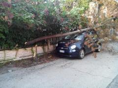 Un albero caduto su una vettura a Senigallia