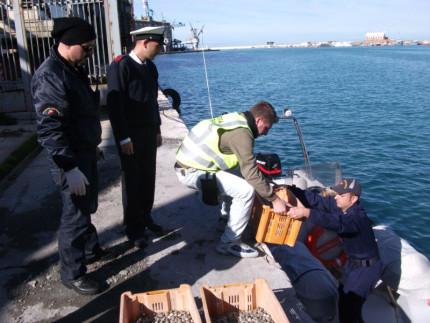 Operazione della Guardia Costiera: controlli sulla filiera del pescato, multe e sequestri
