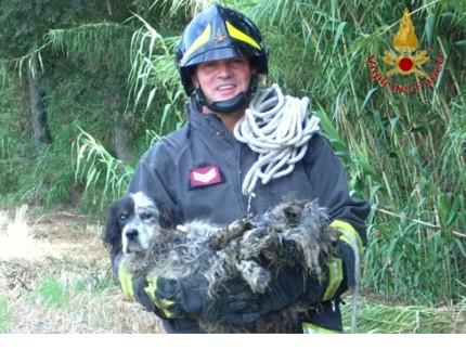 Salvataggio cane, Vigili del Fuoco
