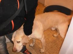 Cani soccorsi da Legambiente