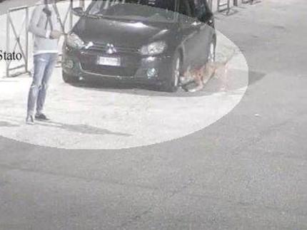 Auto danneggiate da un pitbull