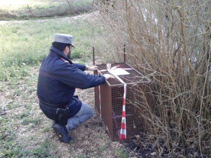 Trappole scoperte a Sassoferrato