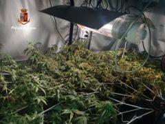 Serra di cannabis scoperta a Monsano