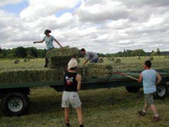 Agricoltura, campo rurale, campo agricolo, coltivatori