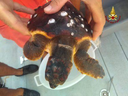 Recupero tartaruga marina