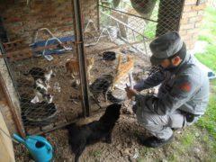 Maltrattamenti sugli animali a Sassoferrato