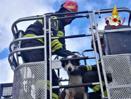 Salvataggio di un cane ferito da parte dei Vigili del Fuoco