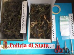 Arresto per coltivazione e spaccio di marijuana