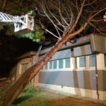 Forte vento: albero caduto a Senigallia