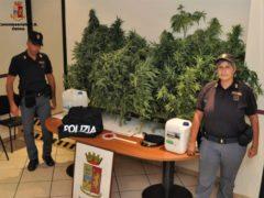 Piante di cannabis sequestrate a Loreto