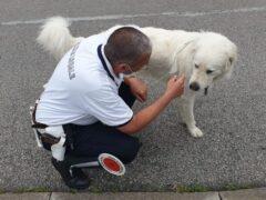 Cane ritrovato a Falconara