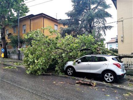Albero caduto ad Ancona per l'ondata di maltempo