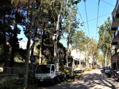 Potature degli alberi ad Ancona