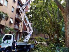 Potatura degli alberi ad Ancona