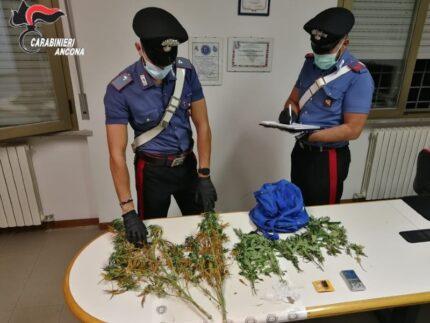 Carabinieri: sequestro piante marijuana