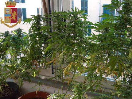 Marijuana rinvenuta ad Ancona