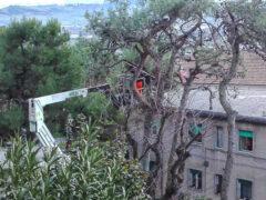 Potatura degli alberi a Camerano