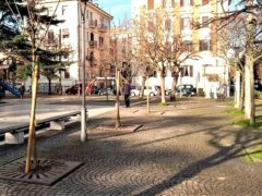 Alberi piantati in piazza Diaz ad Ancona