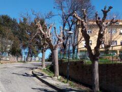 Potatura di alberi ad Ancona